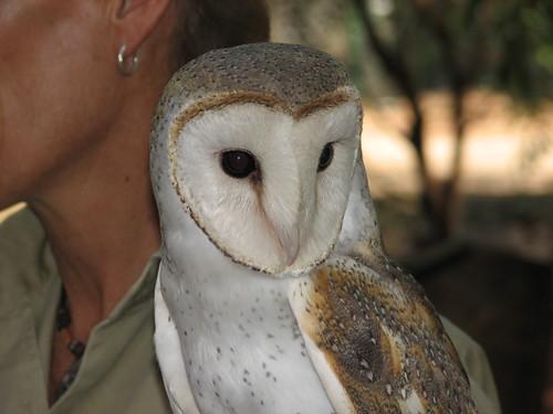 Barn Owl Territory Wildlife Park