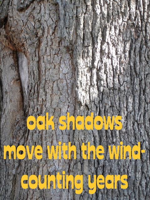 oakshadows