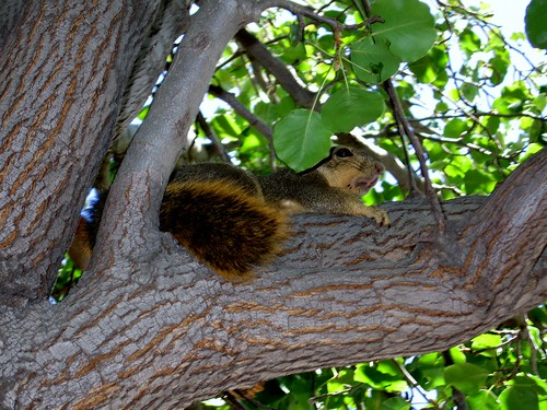 Devious Squirrel