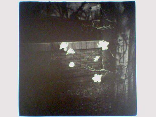 Magnolias  �  10.10.06