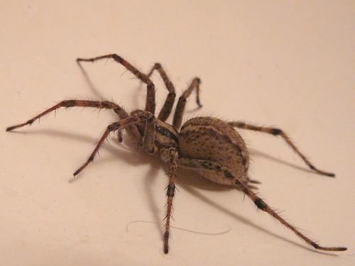 spider_003