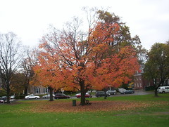 Fall Leaves in Amherst