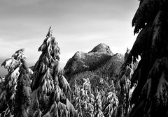 Coquitlam Mountain with snowy b&w trees photo by Christopher J. Morley