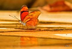 Borboletinha photo by Leo Stravalli