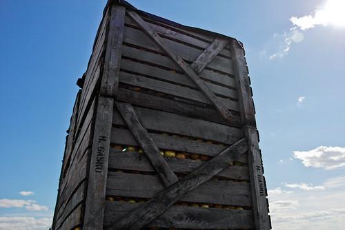 Things, Holland Marsh Onion Boxes - Alexa Clark