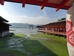 Itsukushima Shrine (厳島神社境内と鳥居) photo by MRSY