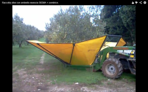 olive harvesting machine02
