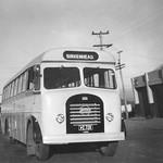 1955 Seddon MK6/2 bus