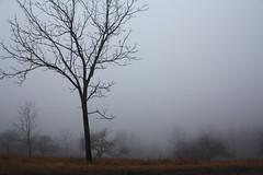Foggy Day photo by jessp.