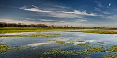 UK - Oxford - Port Meadow panorama photo by Darrell Godliman