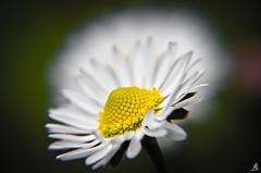 Finally ... springtime photo by Alessandro Giorgi Art Photography