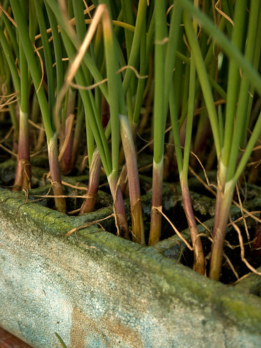 Green Onions at San Sebastian Market