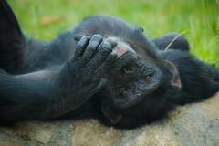 At ease photo by Neferkheperure