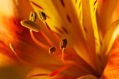 Monday flower macro photo by Rob Emes