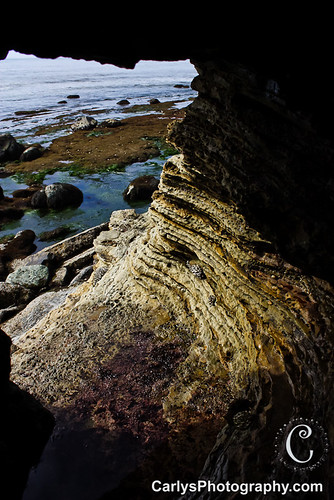 san diego tide pools (11 of 34).jpg