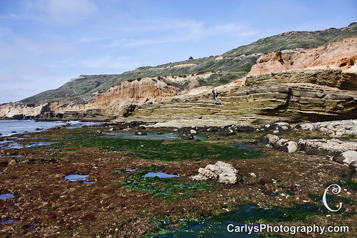 san diego tide pools (4 of 34).jpg