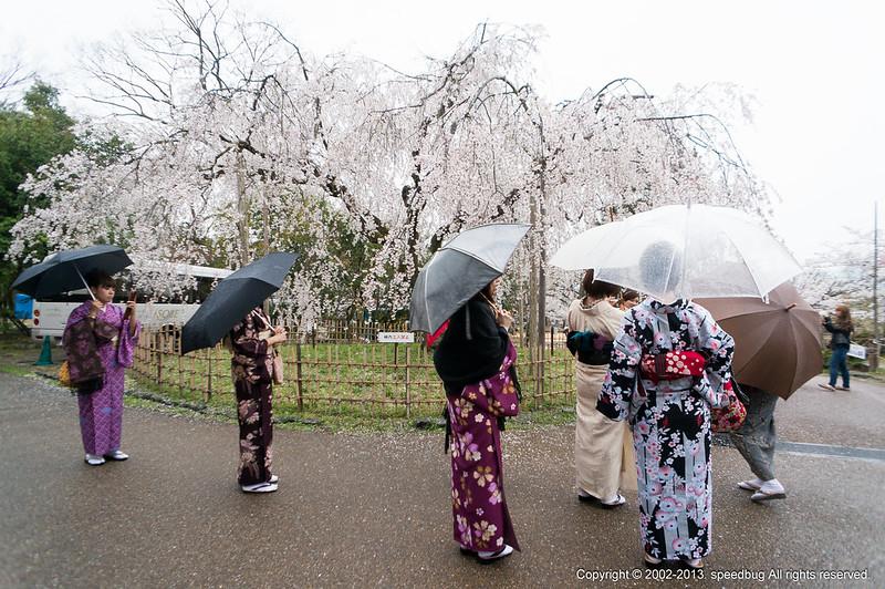 今日熱門文章:京都|煙雨櫻花.八阪神社.円山公園