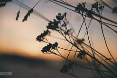Half Light photo by desomnis