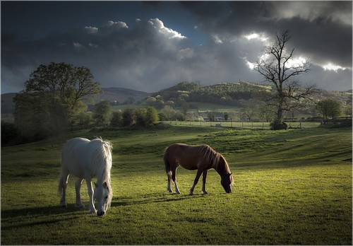 Talybont Ponies (Explored) photo by AJ Scapes