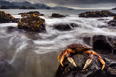 Dungeness Crab @ Low Tide Cannon Beach Oregon photo by The Flannel Photographer