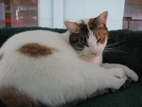 National Cat Protection Society Newport Beach Ca