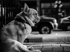What is this dog thinking? photo by Eugene's Likeness