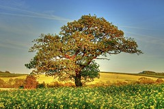 Tree From Me photo by Smirfman