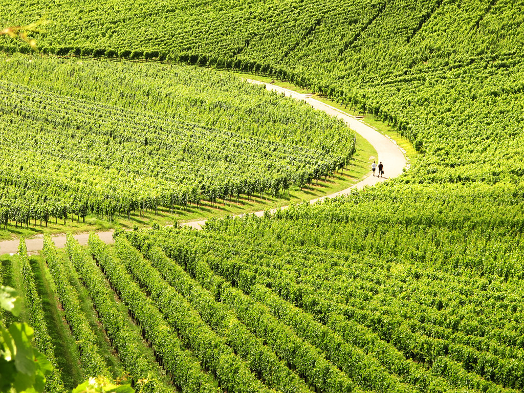 Curve in Vineyards photo by Habub3