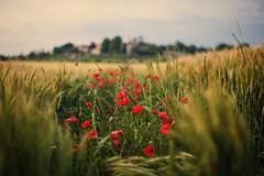 Rurality photo by Allard Schager