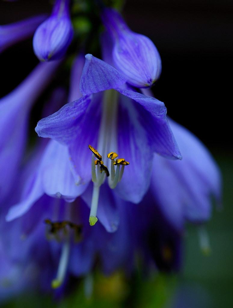 Blue Flower photo by Robert,s
