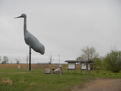 Giant Sandhill Crane in Steele, ND
