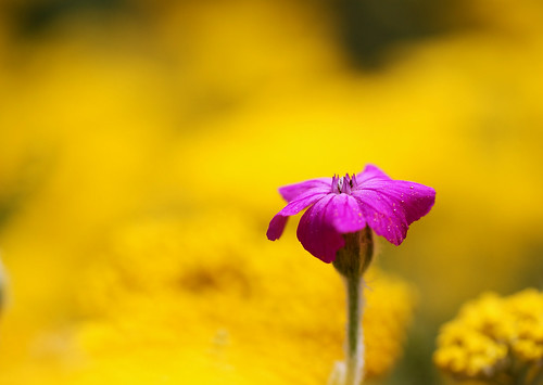 Lonely Pink Flower photo by j man.