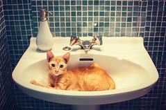 Cat in the sink photo by Marga Corameta
