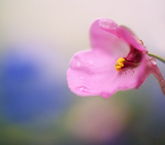 Pink Flower photo by j man.