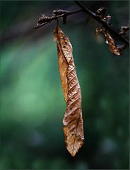 Autumn leaves photo by Viola's visions