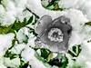 40903385632_ceac65d81a_t