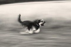 35/52- Panning photo by Kirstyxo
