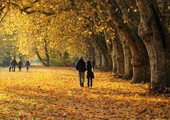 Romantic Autumn Walk photo by Habub3