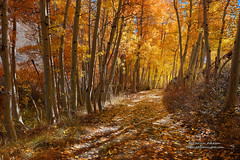 Autumn Splendor - Lost in the High Sierra photo by Darvin Atkeson