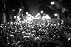 20130126_01_Night Bushes photo by foxfoto_archives