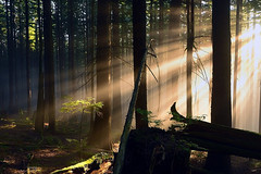 little sunbeam tree photo by Christopher J. Morley