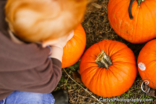 PUMPKIN PATCH - OCT 2012-37.jpg