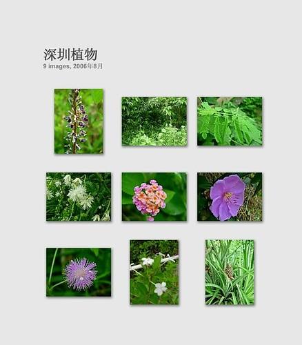 深圳植物 3