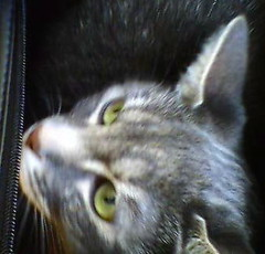Xena in carrier