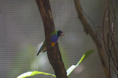 Gouldian Finch Territory Wildlife Park