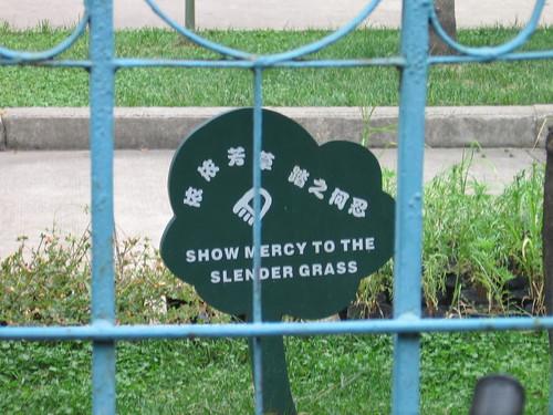 Slender Grass