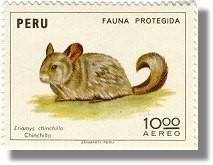 peru-chinchilla