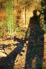 Shadow hikers