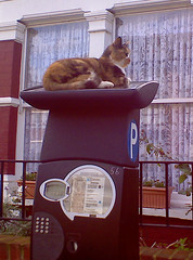 Cat_on_parking_meter
