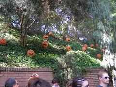 Sept Disney (26)